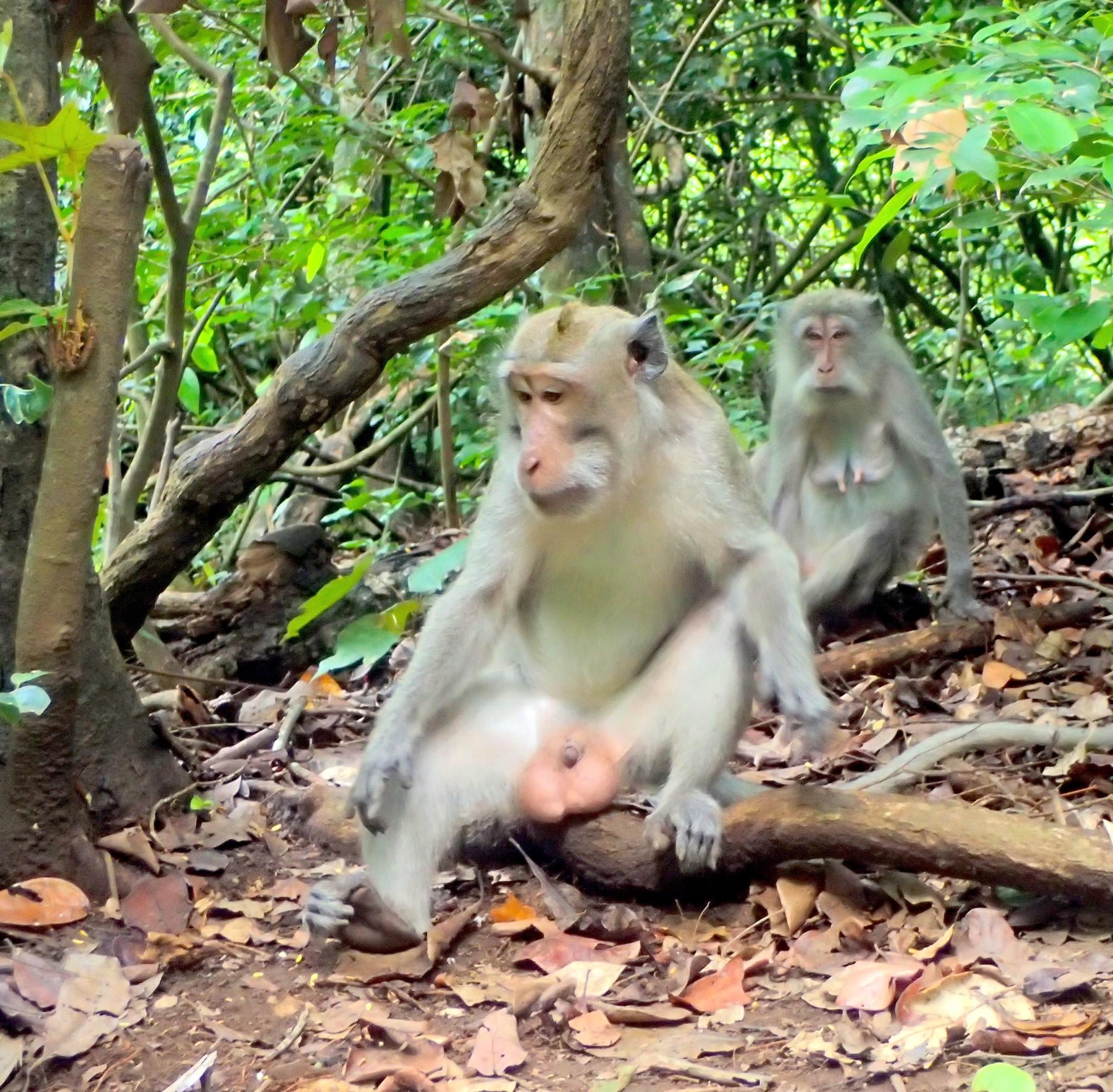 Image Result For Bali Adventuresa