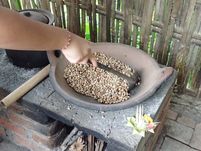 Roasting civet coffee for making kopi luwak